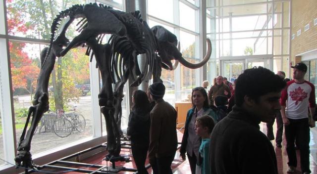Visiteurs regardant le squelette sur pied d'un mastodonte.