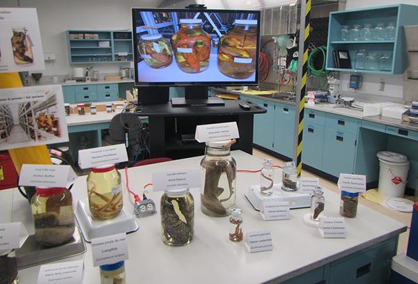 Des spécimens aquatiques dans des bocaux, disposés sur des tables dans un laboratoire.