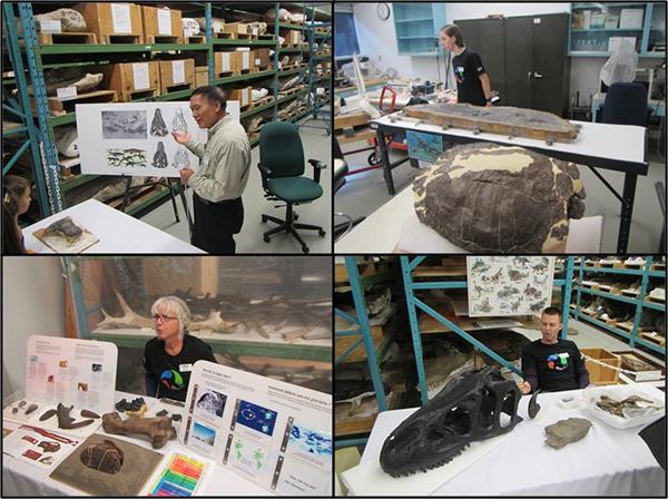 Collage: un homme discute avec des visiteurs devant des étagères contenant des gaines de plâtre; une carapace de tortue fossile (en avant-plan) et un adolescent (à l'arrière-plan); une femme assise derrière une table d'information; un homme assis près d'une table où repose un crâne de dinosaure fossile.