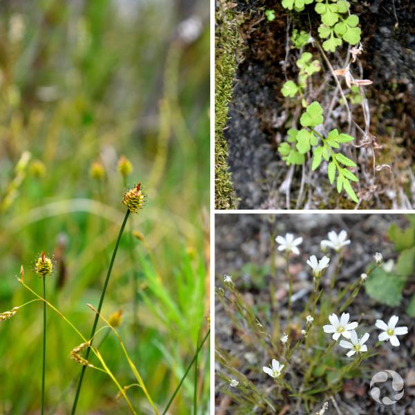 Collagede trois images montrant des plantes différentes.