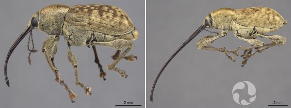 Collage de deux photos d'insectes.