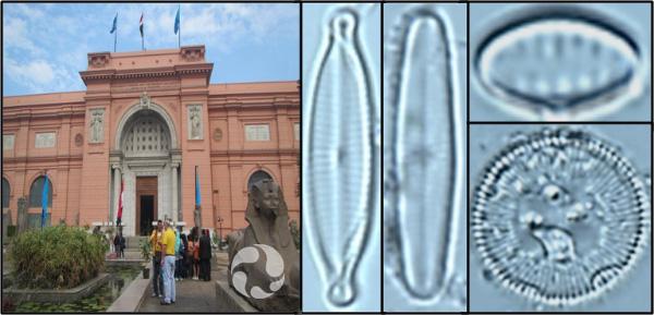 Collage: la façade d'un musée; quatre photos de diatomées vues au microscope.