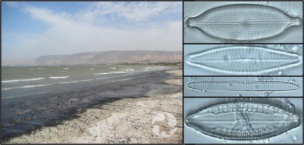 Collage: une plage; quatre photos de diatomées vues au microscope.