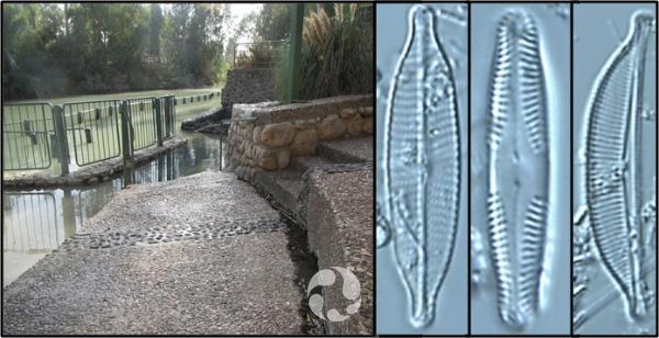 Collage: des marches menant à un bassin clôturé; trois photos de diatomées vues au microscope.