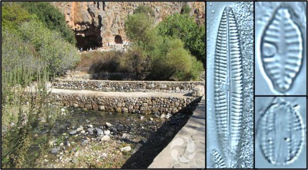 Collage: un ruisseau près d'un pont en pierre; trois photos de diatomées vues au microscope.