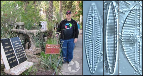 Collage: un homme près d'une fontaine au sol; trois photos de diatomées vues au microscope.