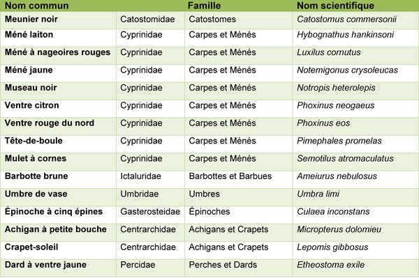 Tableau des noms communs et scientifiques des espèces de poissons présentes dans l'étang.