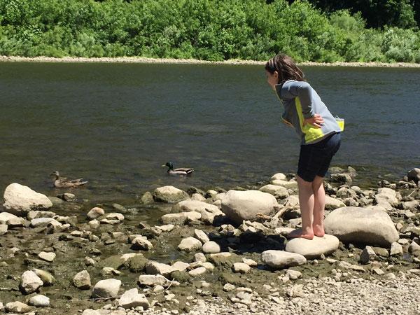 Une jeune fille regardant des canards colverts sur la rivière