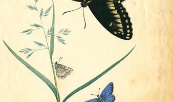Une page d'illustration de papillons réalisée à la main