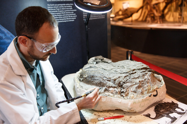 Un homme avec un outil pneumatique enlève la roche d'un fossile de dinosaure.
