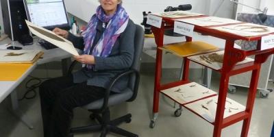 Une femme assise à un ordinateur avec des spécimens d'herbier.