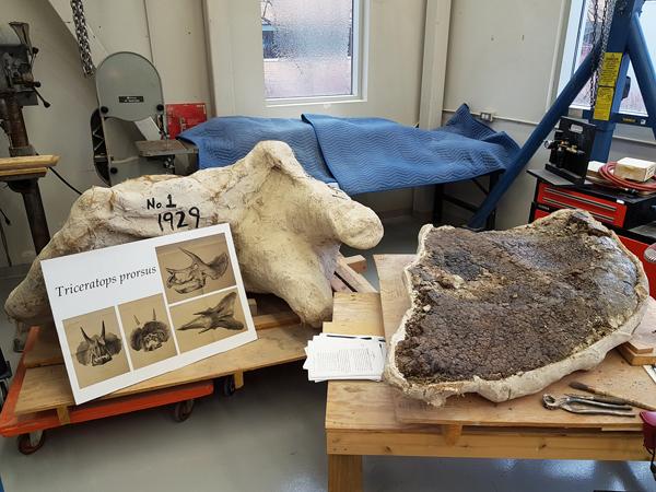 Deux spécimens de fossiles sur des supports de bois dans un atelier.