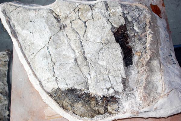 Un spécimen partiellement traité avec deux endroits où transparaît le fossile sous le plâtre.