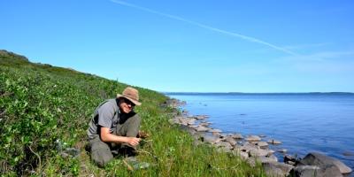 Un scientifique collectant des plantes sur les berges d'un cours d'eau.