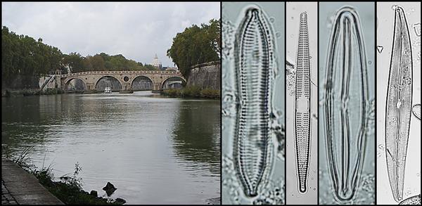 Un collage montrant un pont enjambant un cours d'eau et plusieurs spécimens de phytoplancton.