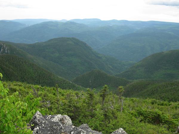 Vue sur une forêt luxuriante à partir du sommet d'une montagne.