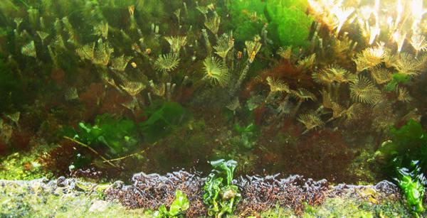 Une scène sous-marine avec des algues et des vers à éventail.