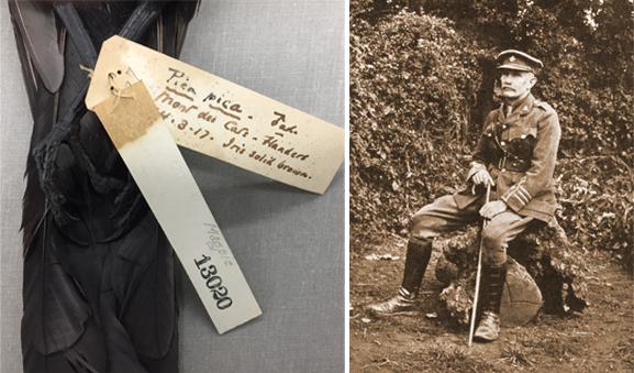 Vue partielle (queue et pattes) d'un spécimen de pie. Deux étiquettes sont attachées à l'une des pattes de l'oiseau. On peut notamment lire sur l'une d'elle : Pica pica; Mont des Cats; Flanders; 14.3.17. Le major Allan Brooks en tenue militaire.