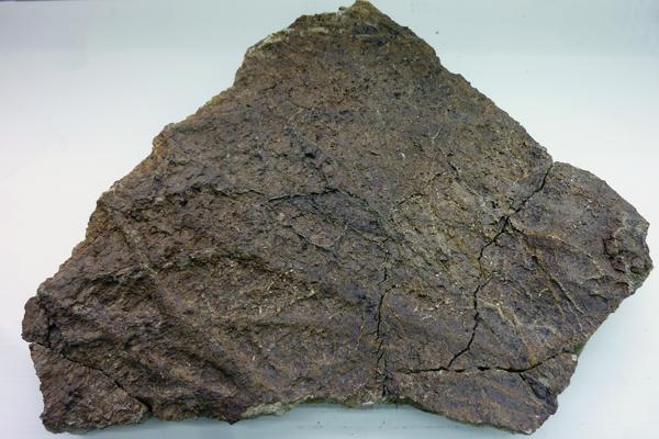 Canaux sillonnant la surface d'un fossile de dinosaure.