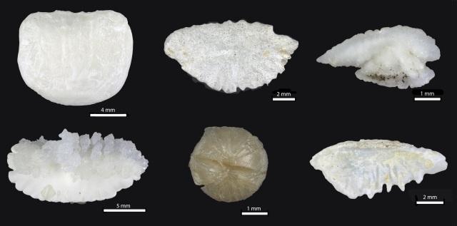 Six objets blancs ou blanc cassé, ronds ou légèrement ovales, disposés en deux rangées de trois. Selon l'échelle sur l'image, les objets mesurent de trois à douze millimètres.