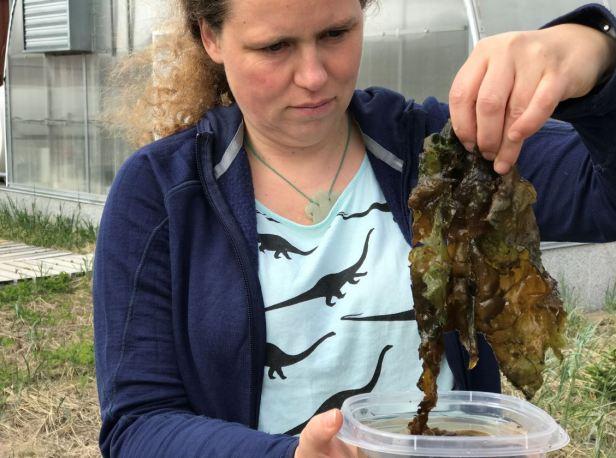 Une femme aux cheveux bruns et bouclés, chandail bleu et t-shirt avec dinosaure, tire des Nostoc dégoulinants d'un récipient plein d'eau. On dirait une algue. À l'arrière, un bâtiment entouré d'herbes.