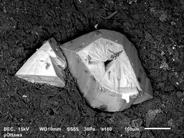 Image en niveaux de gris de deux cristaux de vin gris pâle de 200 et 400 microns sur du liège gris foncé.