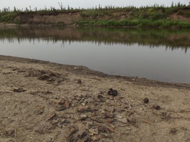 Photo de fossiles sur la berge d'une rivière.