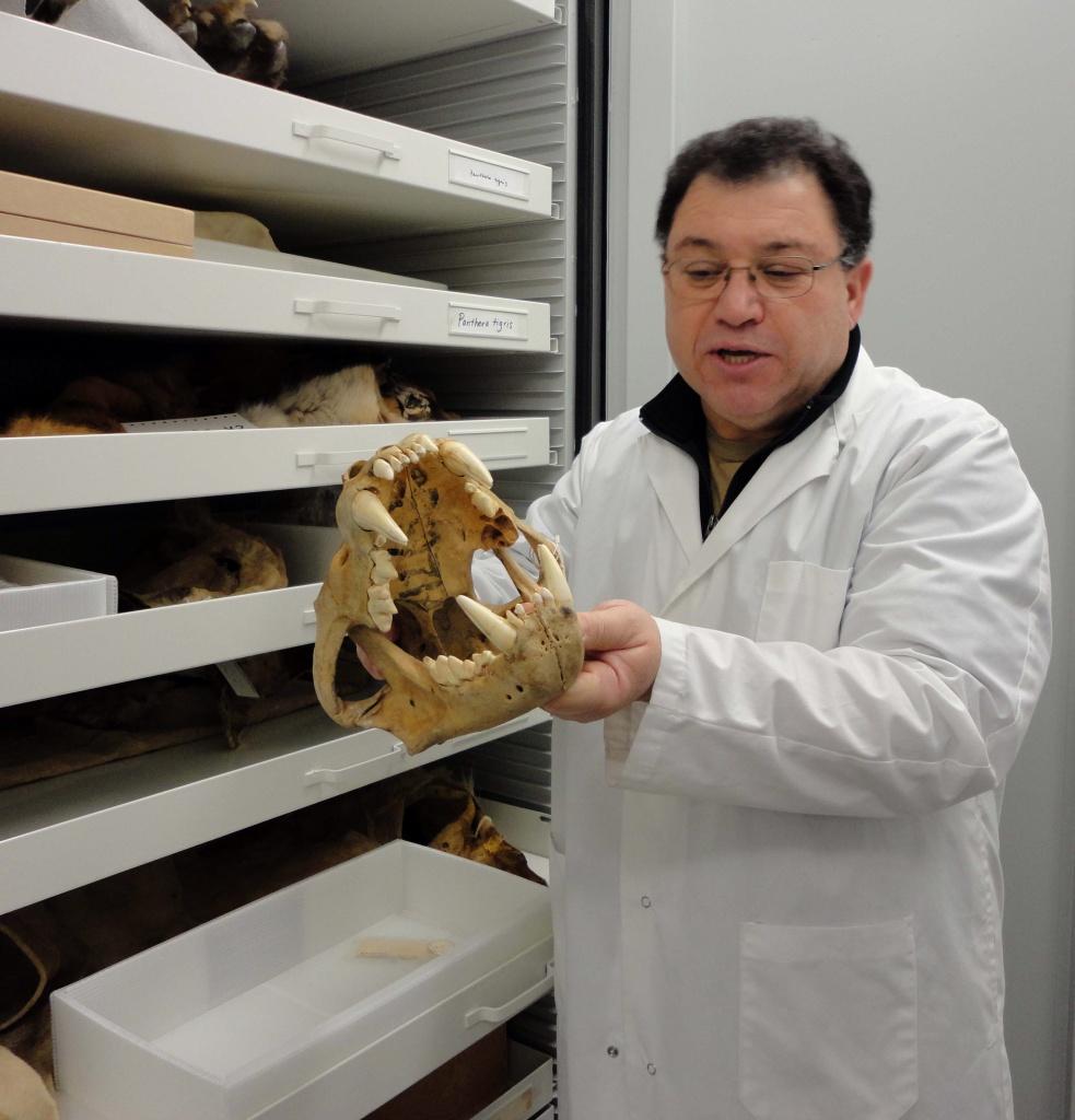 Un homme en sarrau blanc tient le crâne d'un animal devant des tiroirs contenant d'autres os d'animaux.