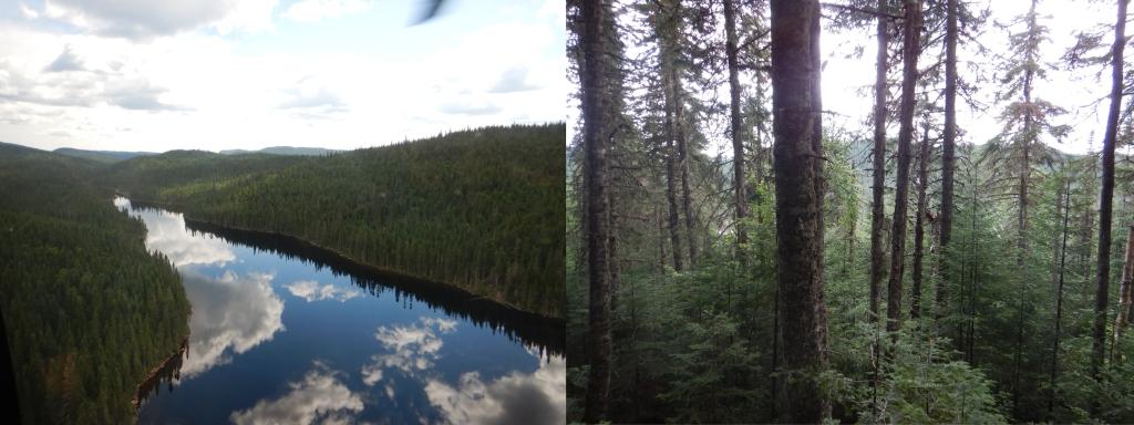 Deux images côte à côte. À gauche, un lac parfaitement calme, entouré de toutes parts d'une forêt dense, à la surface duquel les nuages se reflètent. À droite, un peuplement de hauts sapins baumiers, entouré d'arbres plus petits.